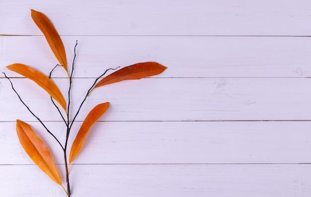 Composition d'automne avec des feuilles Photo Premium