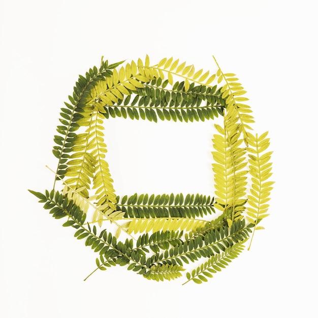 Composition de brindilles de fougères vertes et jaunes Photo gratuit
