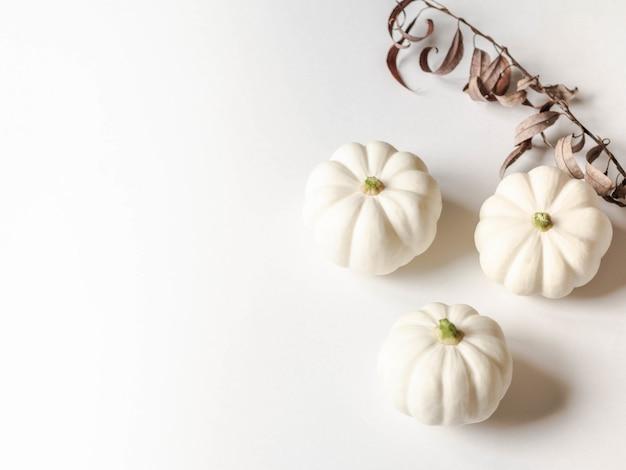 Composition florale botanique d'automne citrouilles blanches décoratives sur fond blanc. espace de copie Photo Premium