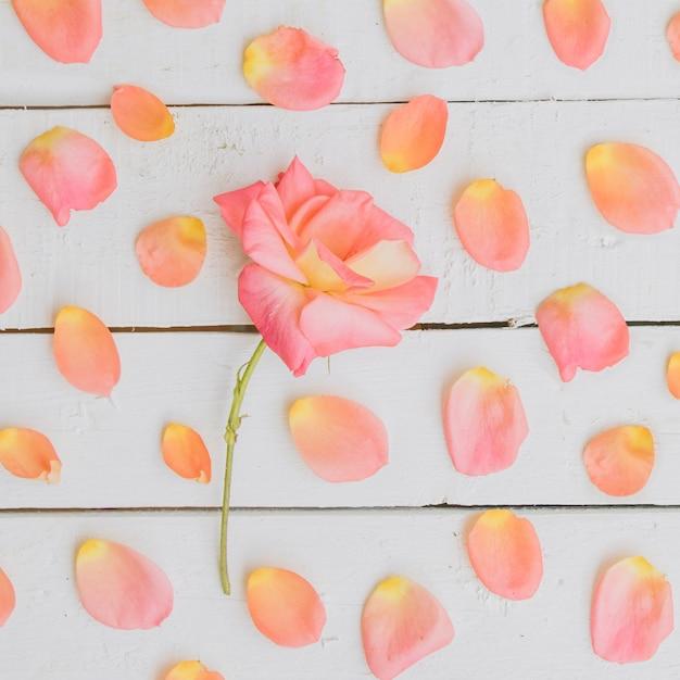 Composition Florale. Cadre En Fleurs Séchées. Photo gratuit