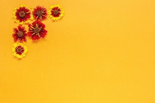 Composition Florale. Plusieurs Fleurs Rouges Jaunes Dans Le Coin Supérieur Gauche Sur Fond Orange. Composition De Haut En Bas à Plat. Photo Premium