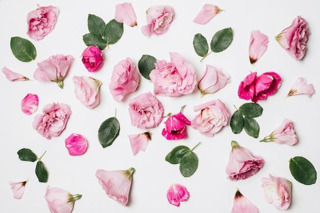 Composition de merveilleuses fleurs roses et feuillage vert Photo gratuit