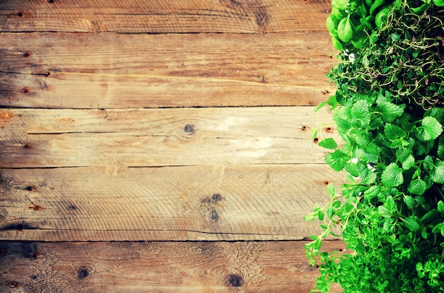 Concept abstrait de printemps ou d'été. herbes biologiques (mélisse, menthe, thym, basilic, persil) Photo Premium