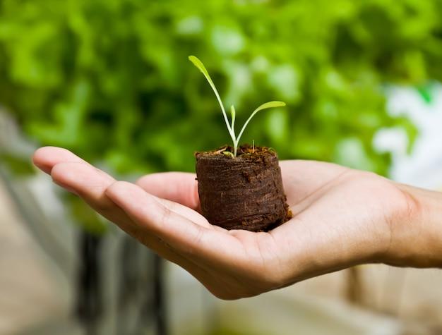 Concept de bras agriculture sprout close-up Photo gratuit