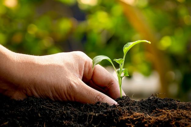 Concept de croissance, les mains plantent les semis dans le sol Photo Premium