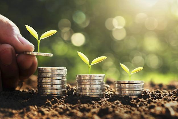 Concept d'économie et de croissance de l'argent Photo Premium