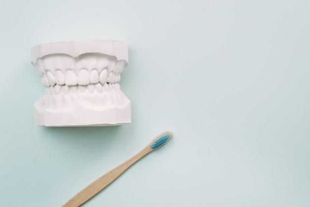 Le Concept De La Façon De Bien Se Brosser Les Dents. Brosse à Dents En Bambou Se Trouvent Sur Un Fond Bleu Et à Côté Du Modèle En Plâtre De La Mâchoire Humaine. Orthodontiste. Photo Premium