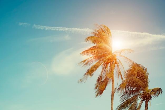 Concept de fond d'été naturel. Photo Premium