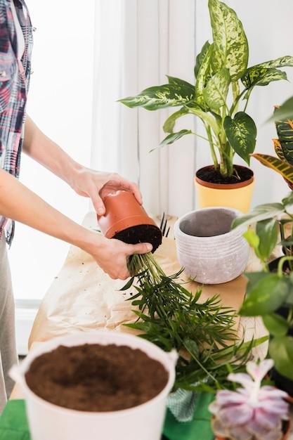 Concept de jardinage avec des mains féminines Photo gratuit