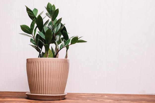 Concept de jardinage avec des plantes Photo gratuit