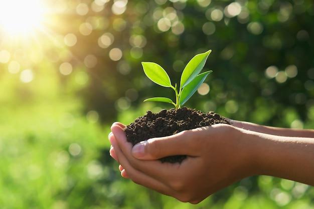 Concept de jour de la terre écologique. main tenant jeune plante au soleil et la nature verte Photo Premium