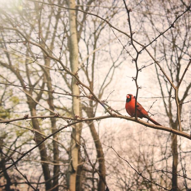 Concept de la nature en tweeting Photo gratuit