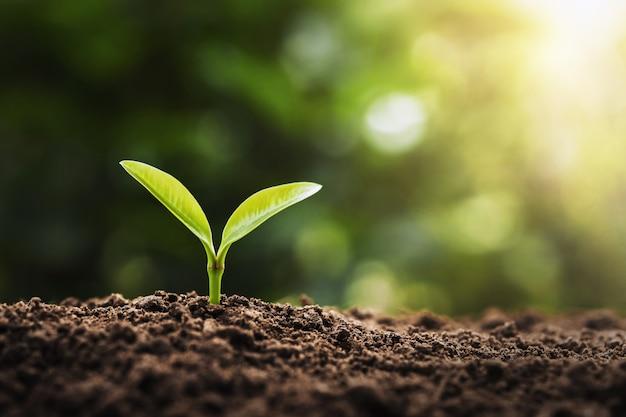 Concept de plantation agricole. jeune arbre poussant sur le sol avec la lumière du matin Photo Premium