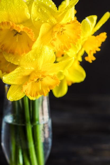 Concept de printemps avec des fleurs jonquilles jaune vif Photo Premium