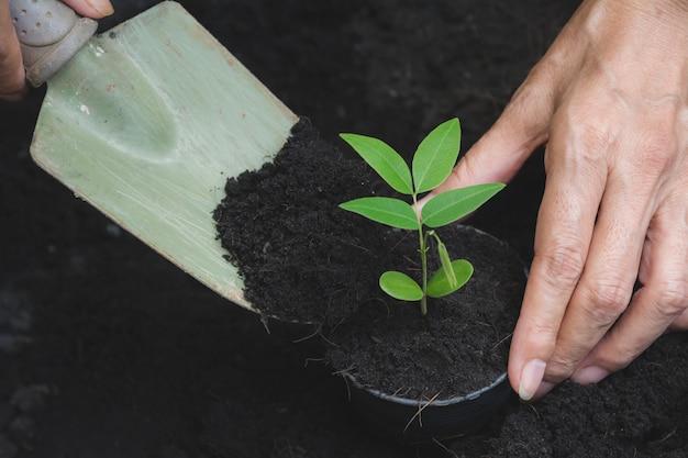 Concept de semis à la main humaine avec jeune arbre sur fond de nature. Photo Premium