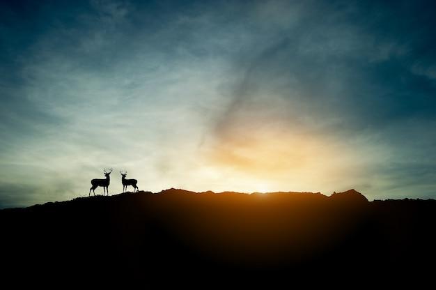 Le concept de la silhouette du coucher du soleil et deux cerfs sur la montagne. Photo Premium