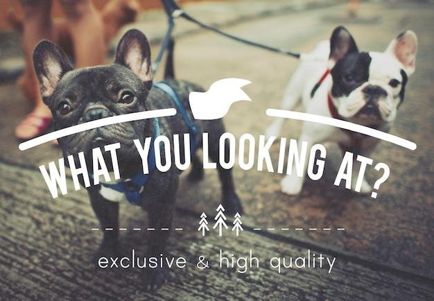 Concept de texte pour animaux domestiques Photo gratuit