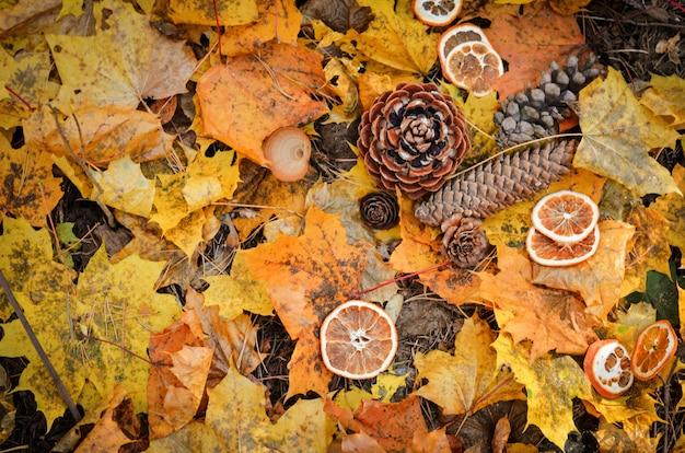 Cônes de sapin forestier sur fond de feuilles jaunes Photo Premium