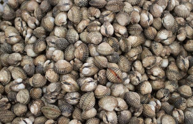 Conservez les coquillages sur la glace pour les fruits de mer Photo Premium