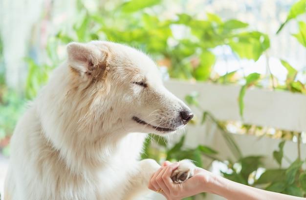 Contact entre la patte du chien et la main humaine, geste d'affection Photo Premium