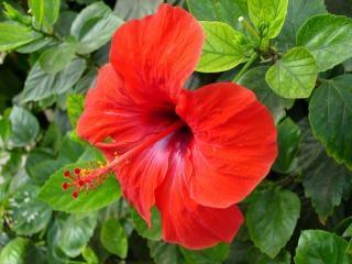 Contrairement fleur rouge Photo gratuit