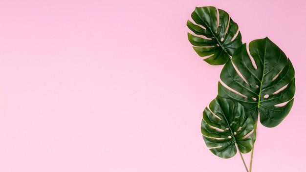 Copier l'espace fond rose avec des feuilles de palmier Photo gratuit