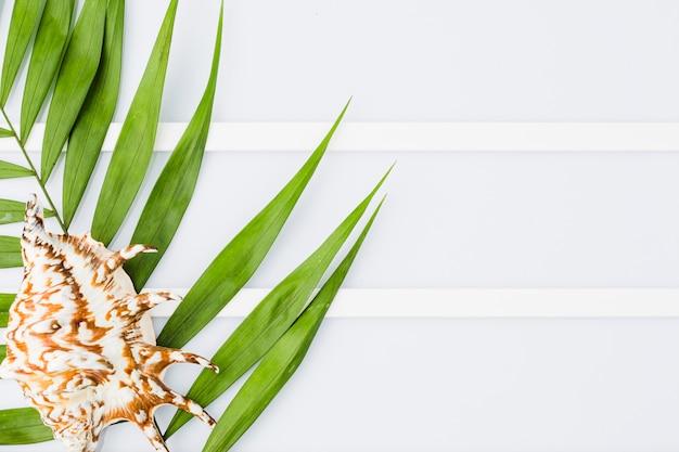 Coquillage et feuilles de plantes à bord Photo gratuit