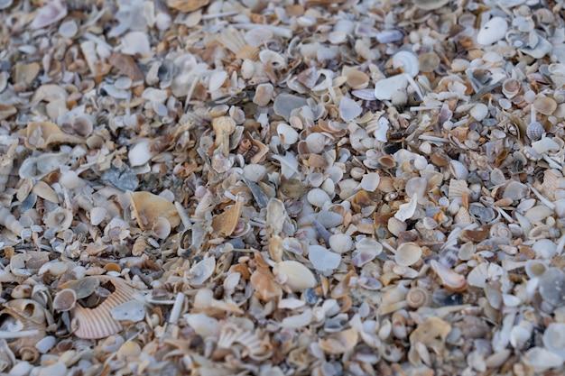 Coquillage sur le sable sur la plage Photo Premium