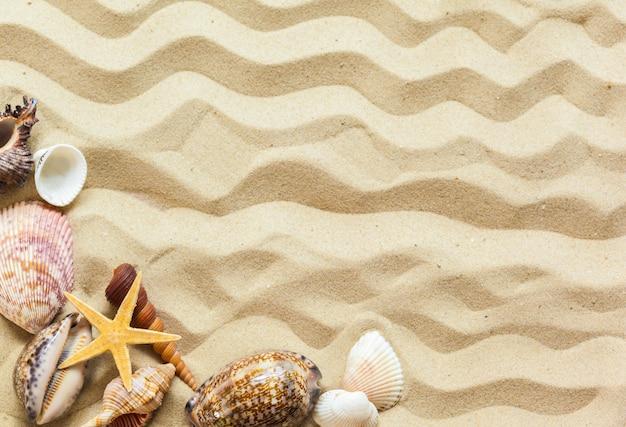 Coquillages sur le sable de la plage Photo Premium