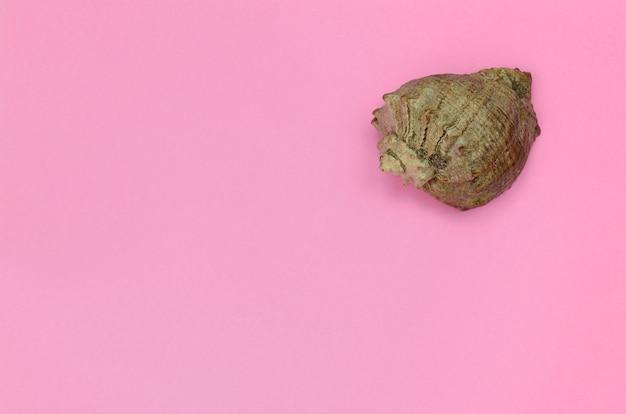 Coquille de mer se trouvent sur fond de texture de papier de couleur rose pastel fashion dans un concept minimal Photo Premium