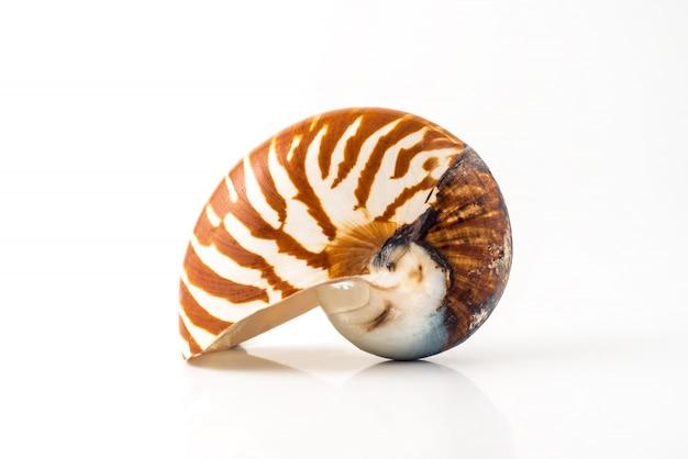 Coquille De Mollusque Nautilus Sur Fond Blanc Photo Premium