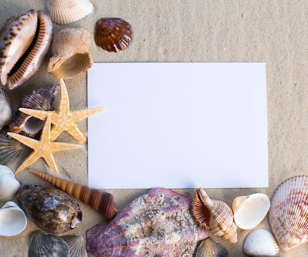 Coquilles, étoiles De Mer Et Une Carte Postale Vierge Photo Premium