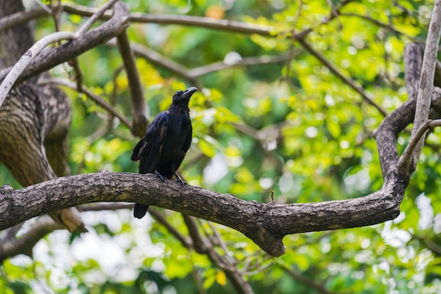 Corbeau noir sur des branches d'arbres Photo Premium