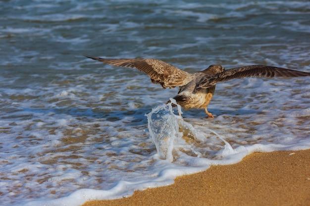Un cormoran survole la surface de l'océan. Photo Premium