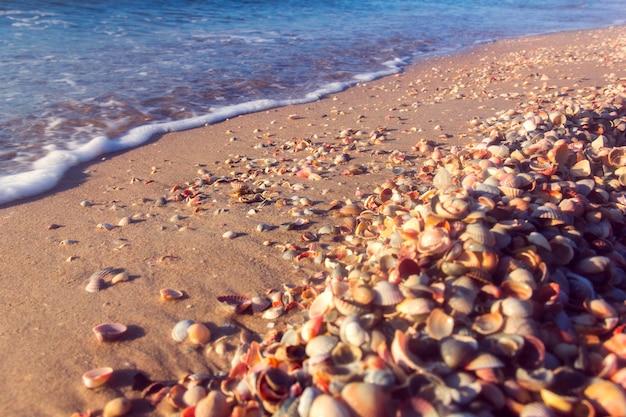 La cote de la mer Photo Premium
