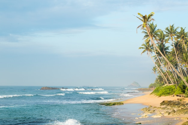 Côte Avec Palmiers Photo Premium