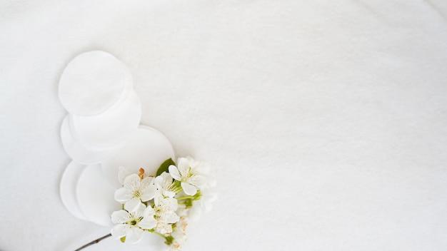 Coton et fleur sur fond blanc Photo Premium
