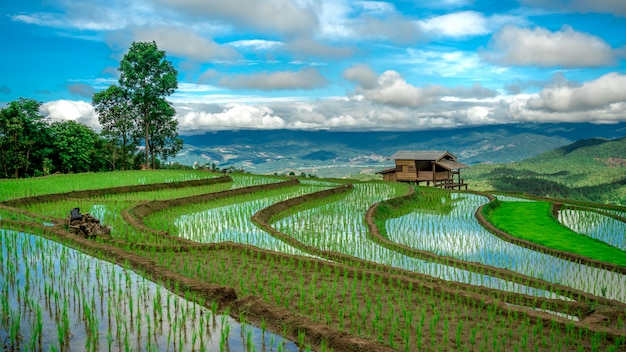 Cottage paddy rice field mountain view Photo Premium