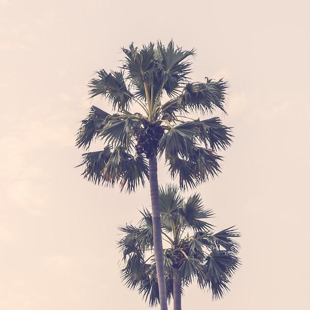 Coucher de soleil arbres effet lumineux d'été Photo gratuit