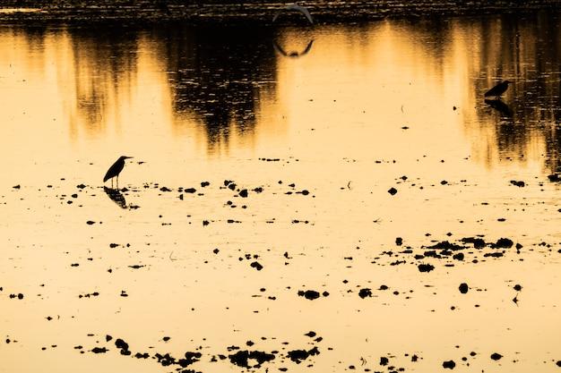 Coucher de soleil coloré au bord du lac de la rivière avec des silhouettes d'oiseau fond de nature reflet magnifique Photo Premium