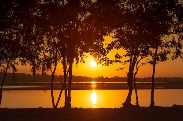 Coucher de soleil rayons traversant les arbres sur le lac Photo Premium