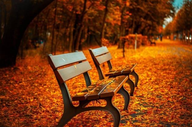 Les couleurs de l'automne Photo gratuit