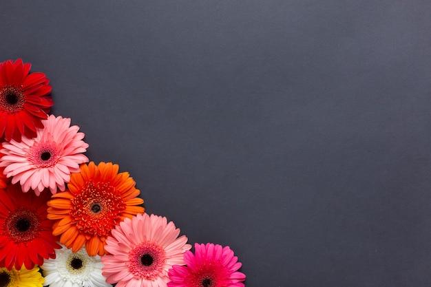 Couleurs Chaudes De Fleurs De Gerbera Sur Fond Noir Photo gratuit