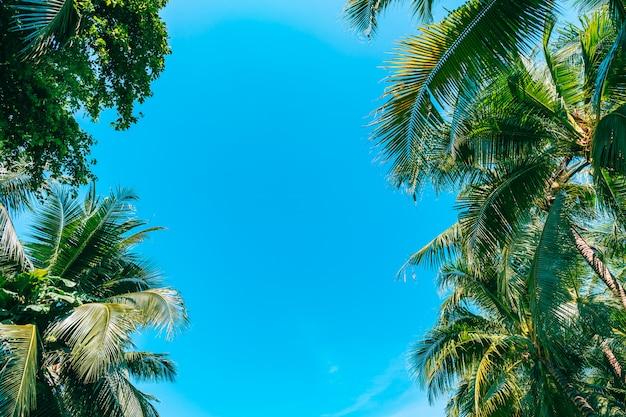 Coup de faible angle de beau cocotier sur ciel bleu Photo gratuit