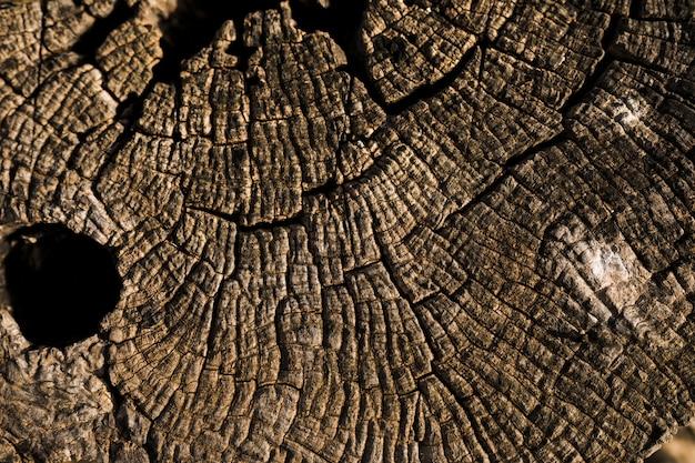 Coup de macro de texture en bois marron Photo gratuit