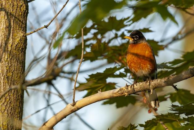 Coup De Mise Au Point Sélective D'un Oiseau Assis Sur Une Branche D'arbre Avec Des Feuilles Photo gratuit