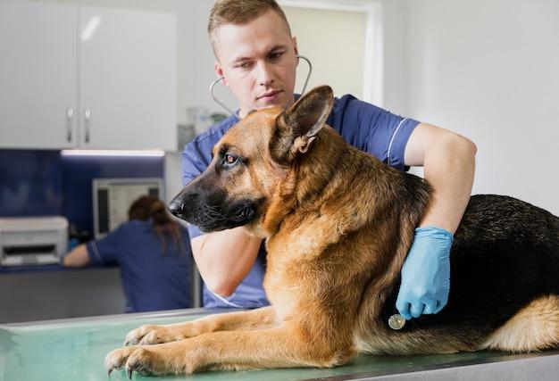 Coup moyen médecin vérifiant la respiration du gros chien Photo gratuit