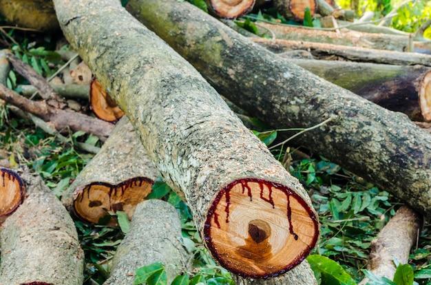 Couper du bois pour le bois de chauffage Photo Premium