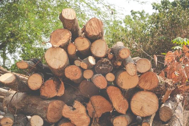 Les coupes de bois finis dans le jardin. Photo gratuit
