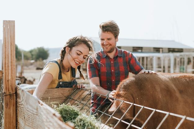 Couple heureux alimentation vache Photo Premium